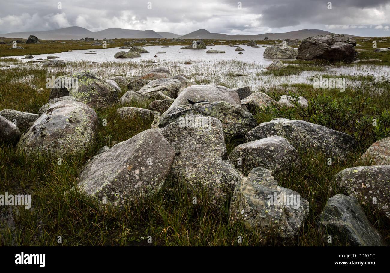 Lago poco profundo y rocas húmedas en la meseta Valdresflye Parque Nacional Jotunheimen Noruega Foto de stock