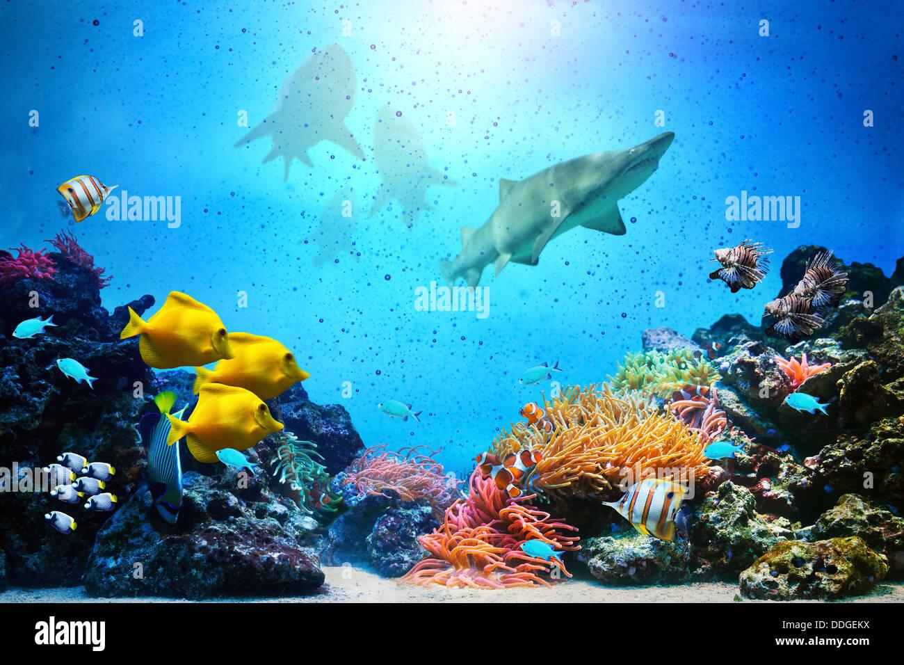 Escena subacuática Imagen De Stock