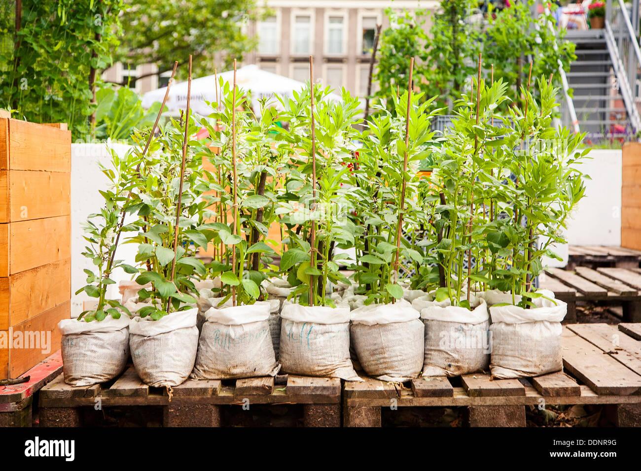 En jardinería, Frankfurt am Main, Hesse, Alemania, Europa Imagen De Stock