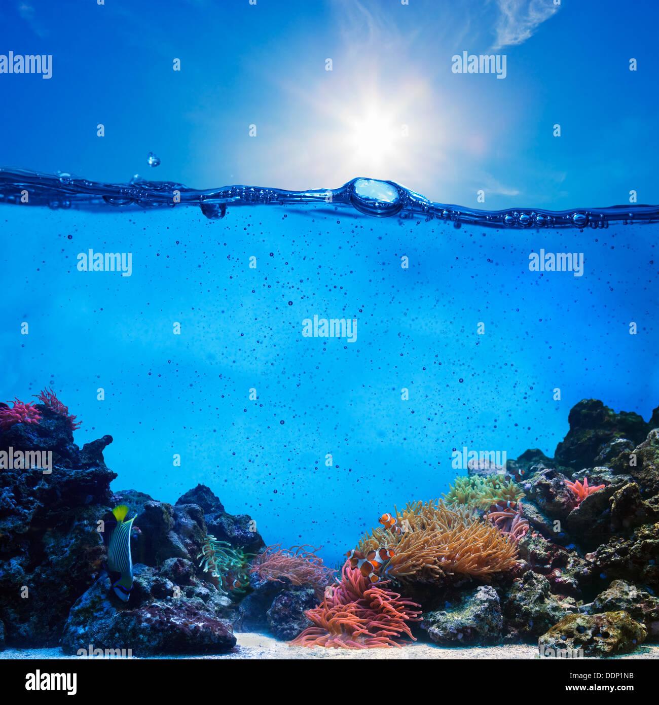 La mitad de escena subacuática. Arrecifes de coral, azul cielo soleado. Imagen De Stock