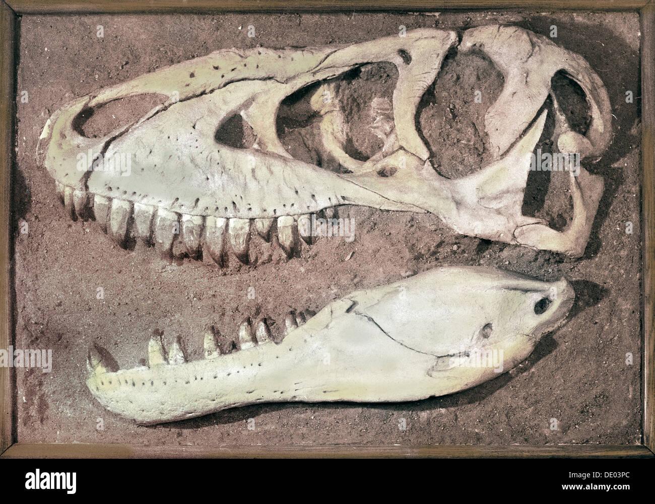 Cabeza de un Tarbosaurus, de Mongolia, a finales del período Cretácico, hace 70-65 millones de años. Artista: Werner forman Imagen De Stock