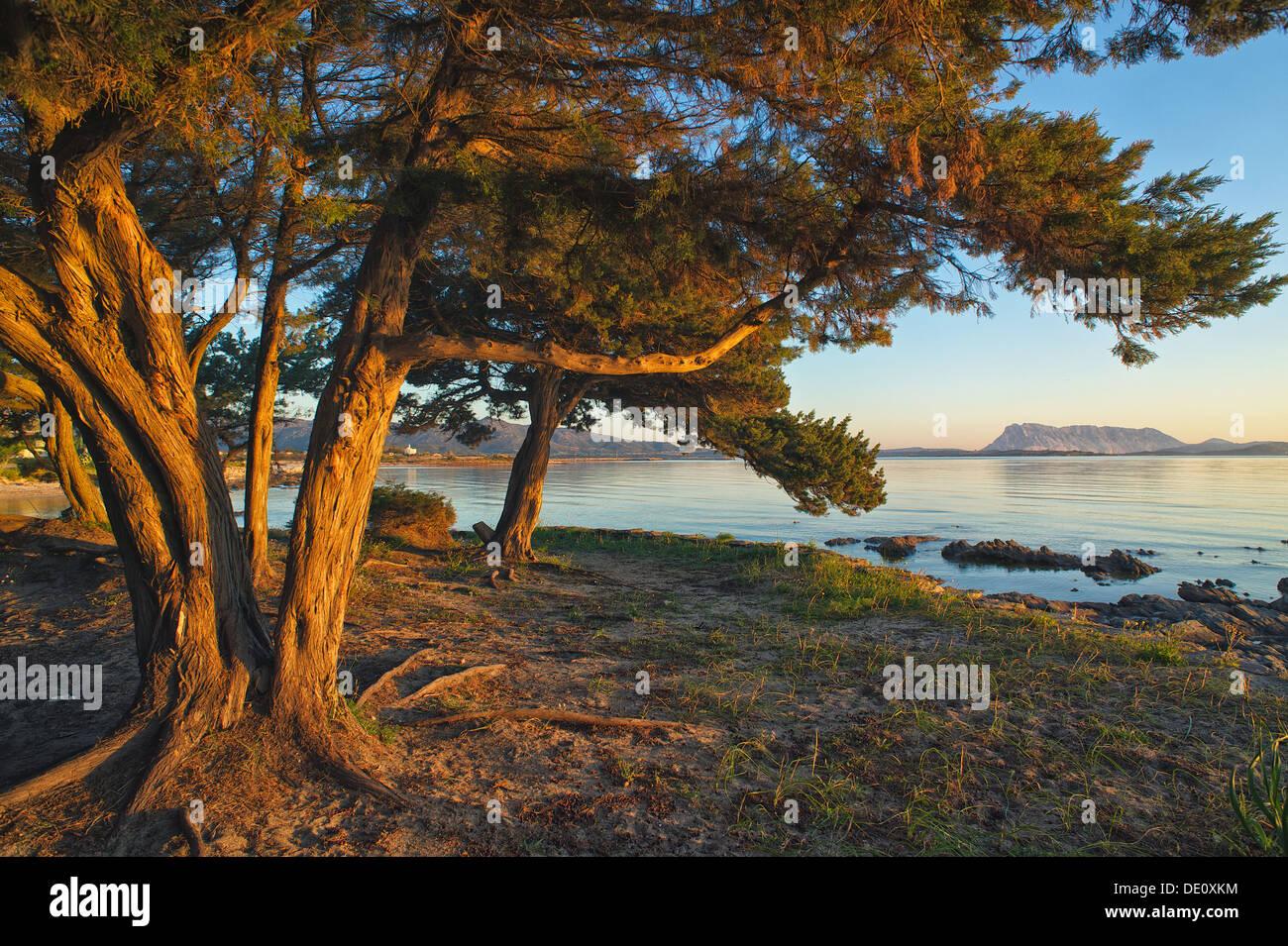 Playa de San Teodoro, Cerdeña, con las montañas distantes Tavolara en la mañana hora dorada Foto de stock