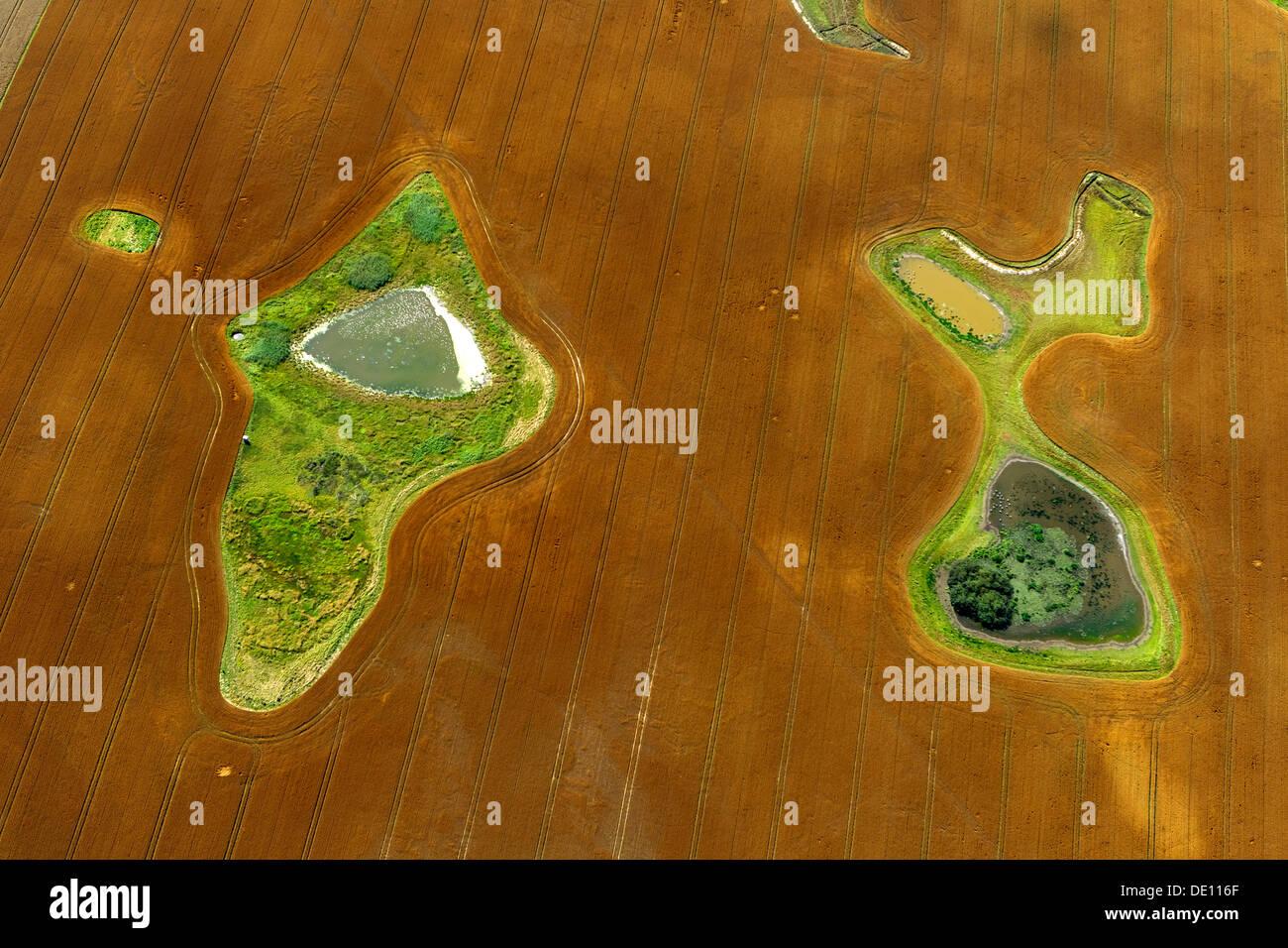 Vista aérea, campo cosechado con estanques islas y prado. Imagen De Stock