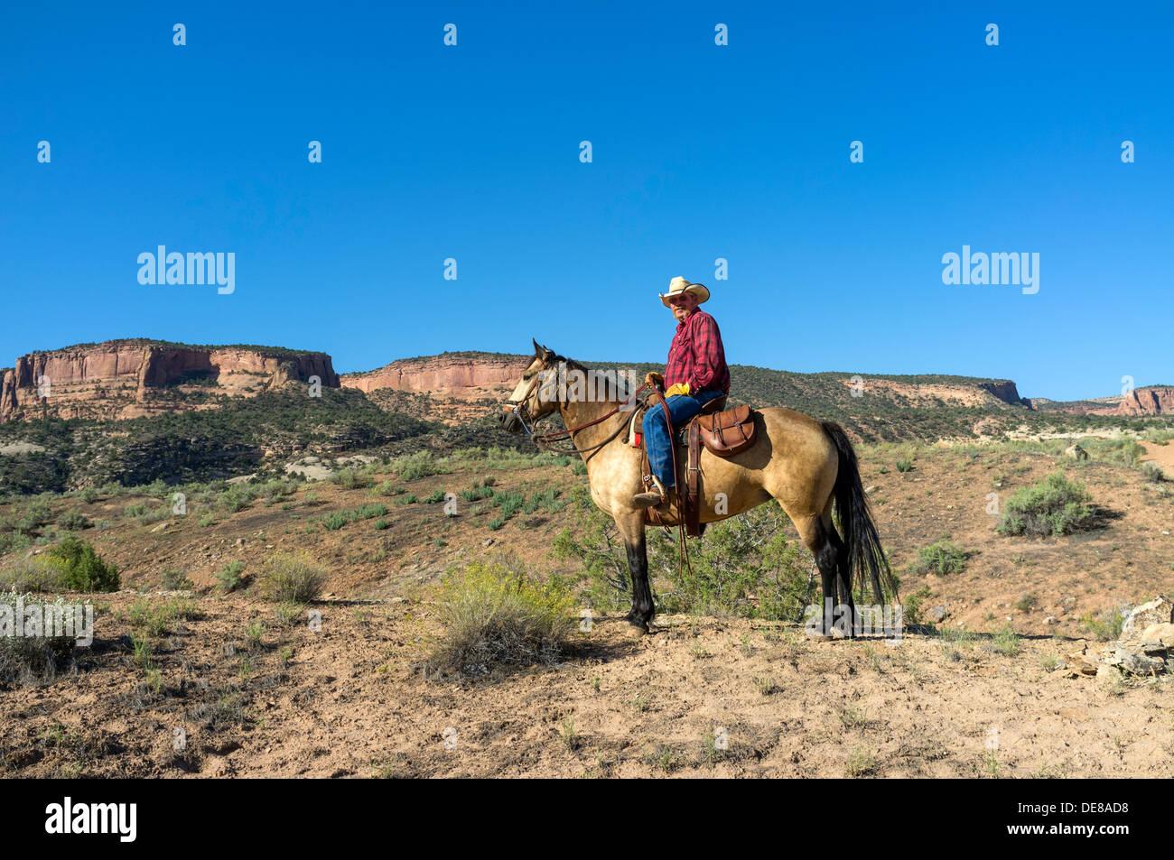 Hoy en día montar a caballo vaquero en su caballo en el desierto cerca del Monumento Nacional de Colorado, Colorado, EE.UU. Foto de stock