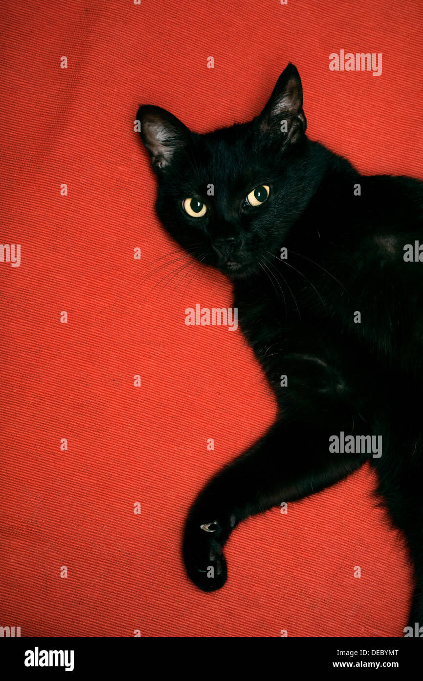 Gato negro Imagen De Stock
