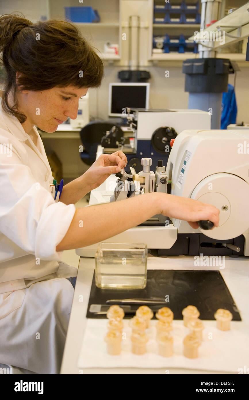 Microtomo, laboratorio de biología pesquera. Pulido y lectura de otolitos y las gónadas. AZTI-Tecnalia. Centro tecnológico Imagen De Stock