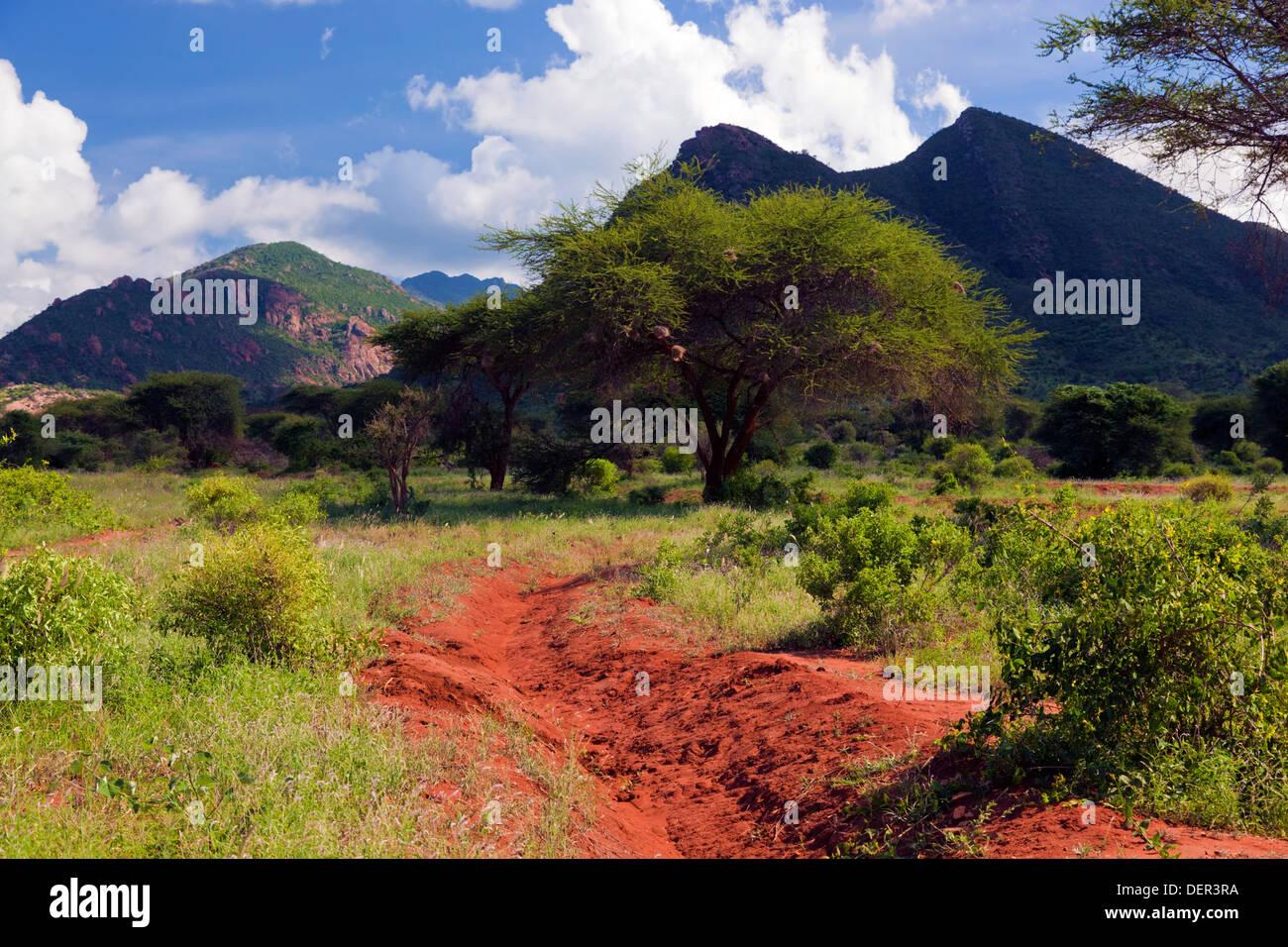 Camino de tierra en el Parque Nacional de Tsavo West, Kenya, Africa. Imagen De Stock