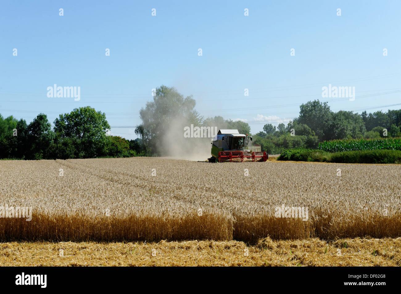 Cosecha de grano, agricultura, cerca de Ismaning, Alta Baviera, Baviera Imagen De Stock