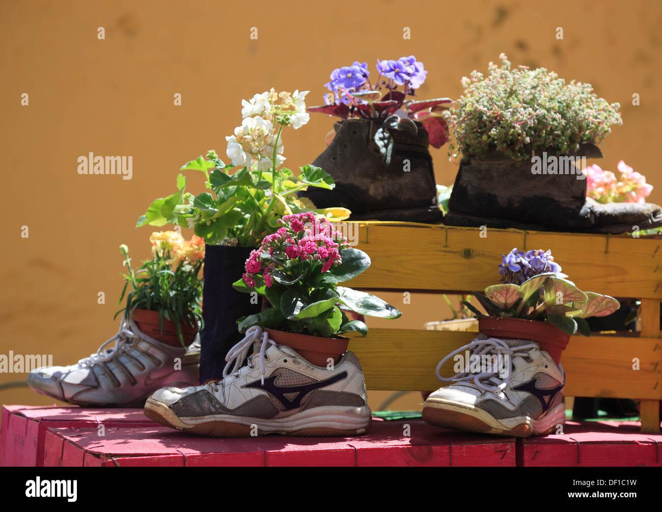 Madeira Arreglos Florales Arte Objeto Plantó Los Zapatos