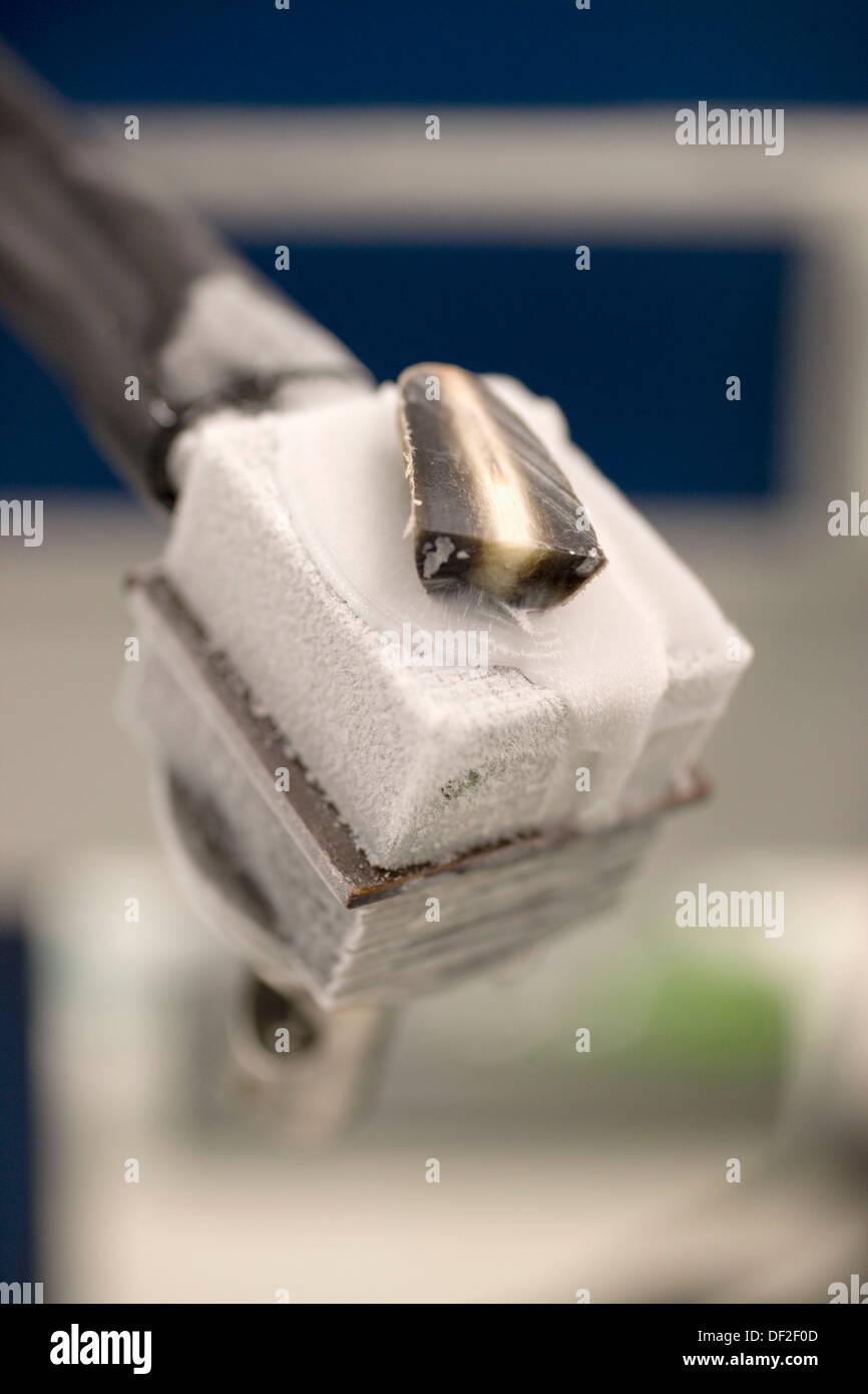 Cuerno de toro muestra en microtomo, laboratorio de anatomía ...