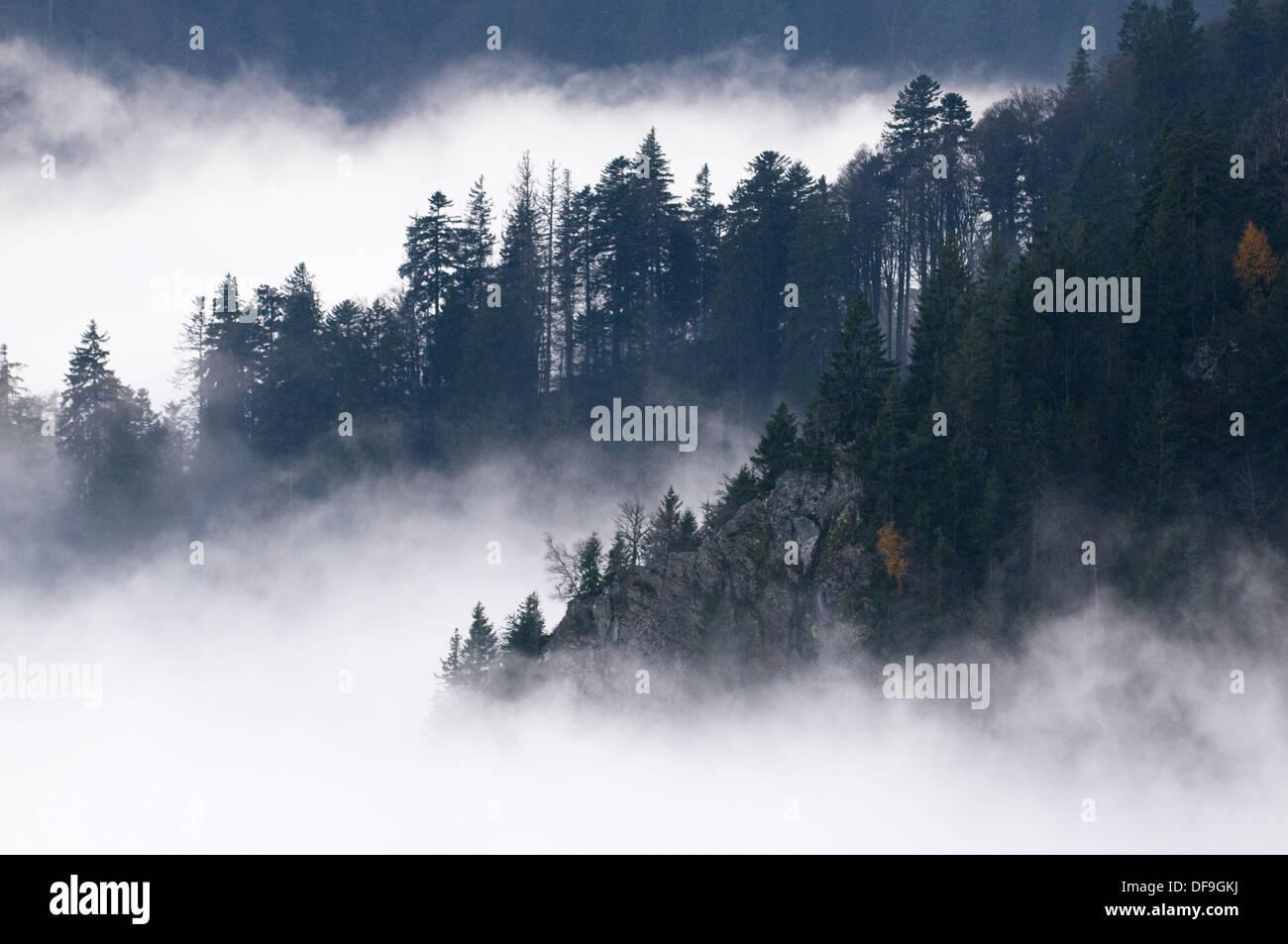 Cubierta de neblina en Vosgos, otoño, bajar laderas montañosas, con bosque de pinos en el macizo Hohneck, Vosges, Francia Imagen De Stock