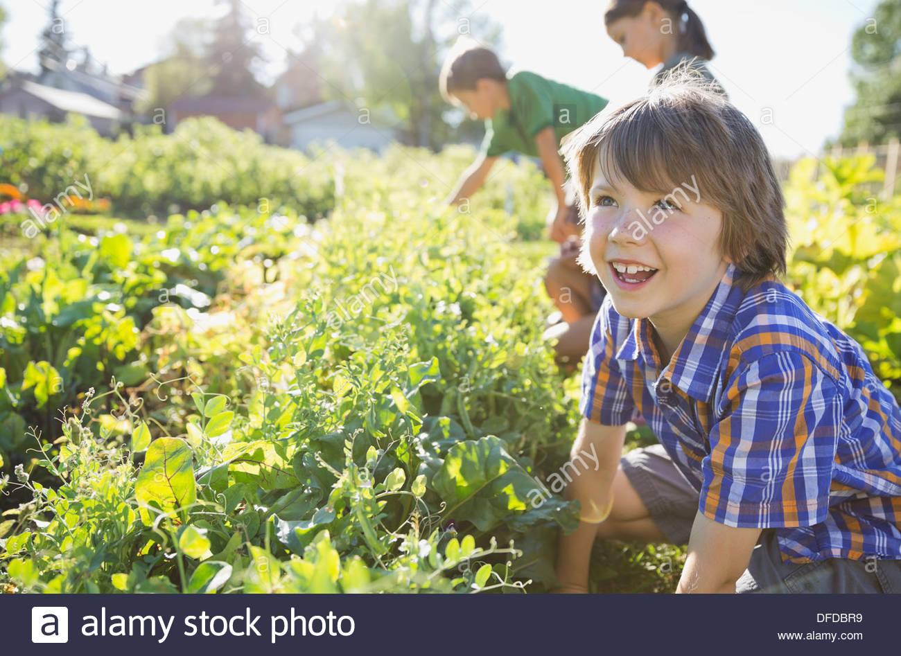 Chico trabaja en un jardín comunitario Imagen De Stock