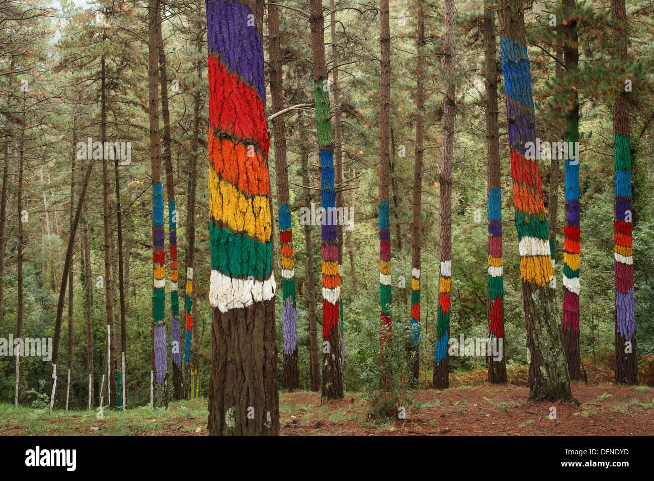 Pintado De Los Troncos De Los árboles, El Bosque Pintado