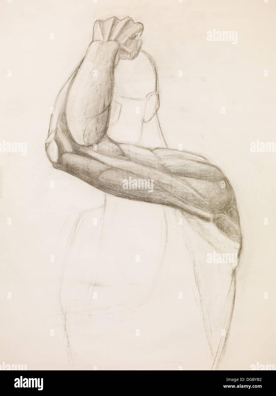 Dibujados a mano de dibujo a lápiz y los músculos del brazo humano ...