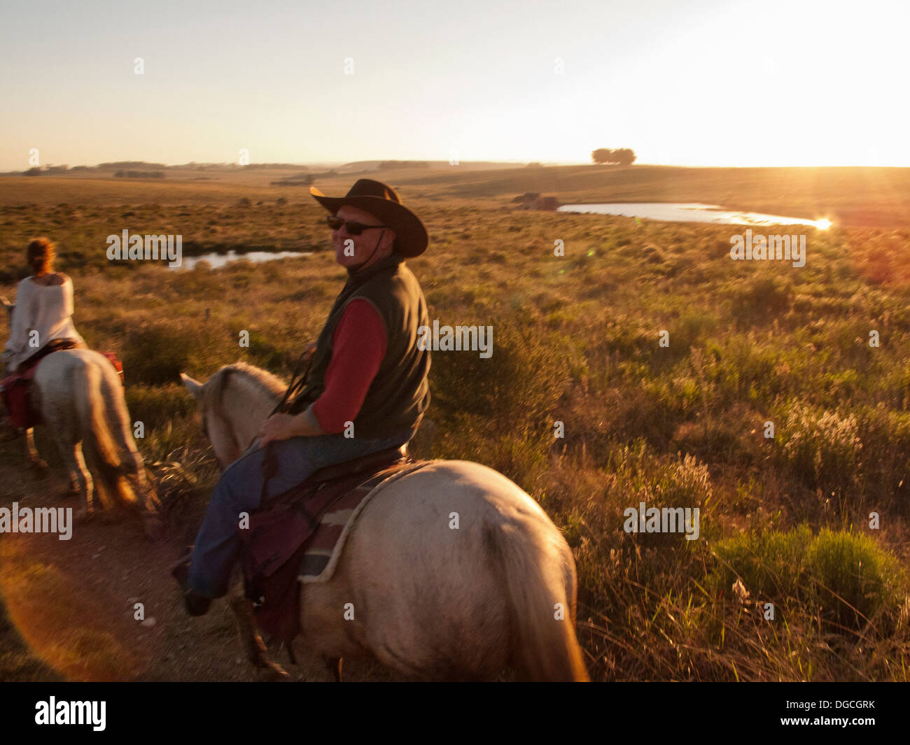 Hombre Senior montando un caballo Criollo, Uruguay Imagen De Stock