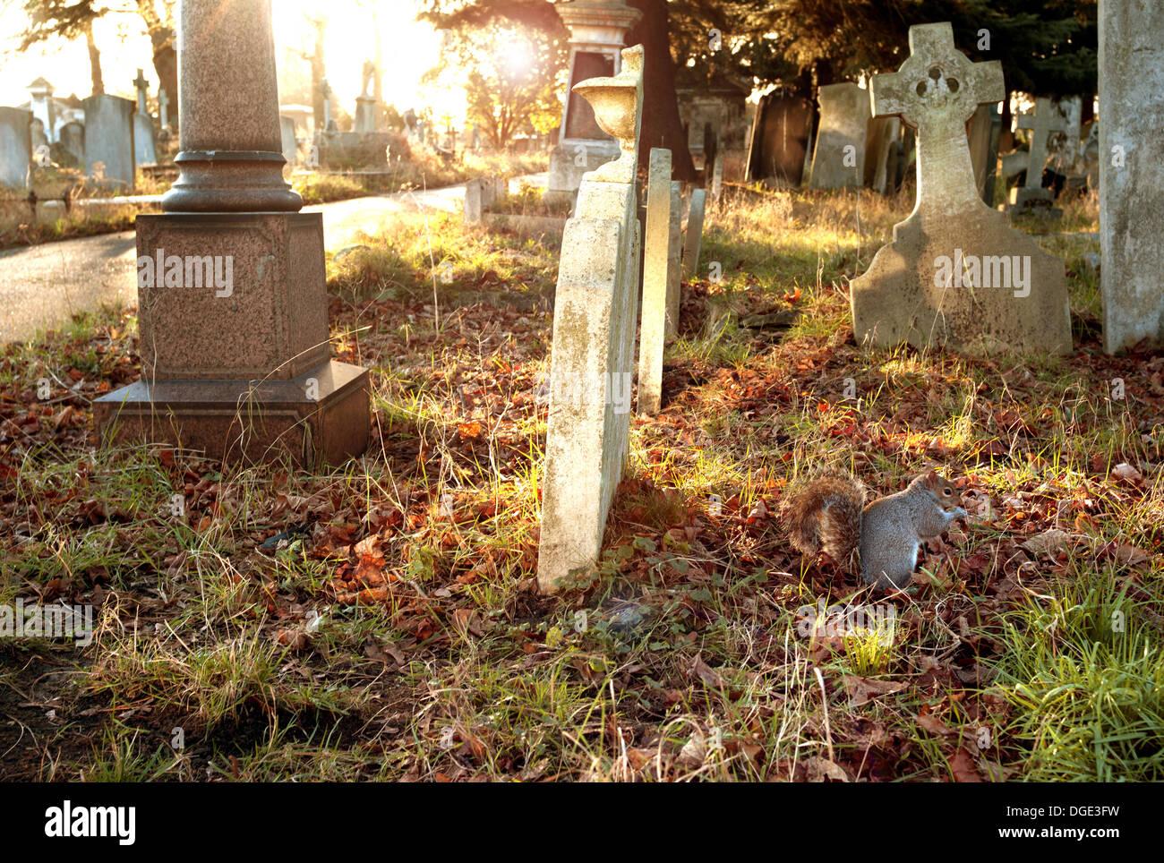 La ardilla en el cementerio de Brompton Road, Londres Foto de stock