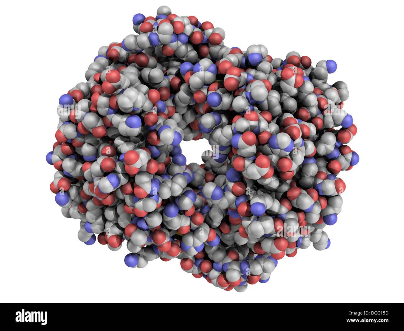 Estructura Química De La Hemoglobina Hb Molécula De