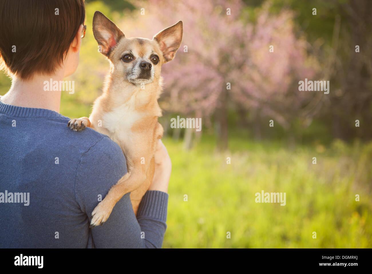 Una mujer joven en un campo de hierba en primavera. La celebración de un pequeño perro chihuahua en sus brazos. Una mascota. Foto de stock