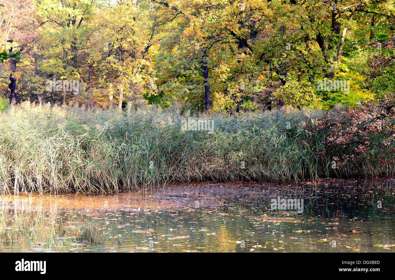Aún tranquila el agua juncos y colores de otoño Foto de stock