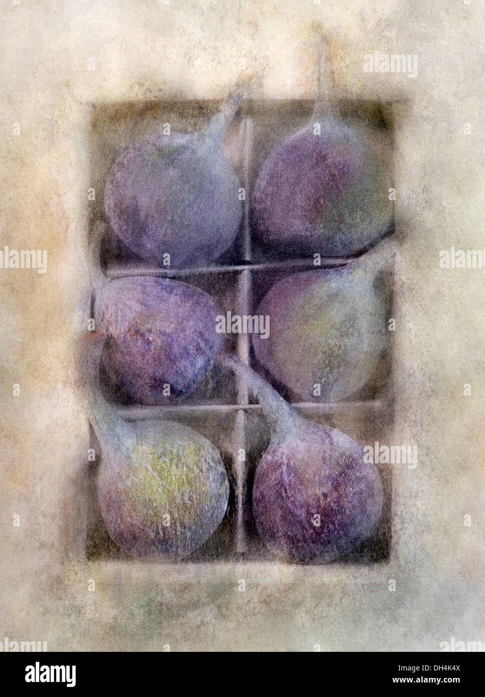 Fig Ficus carica. Imagen de verificación manipuladas digitalmente de seis higos contra ablandado muted background crear efecto de ilustración. Imagen De Stock