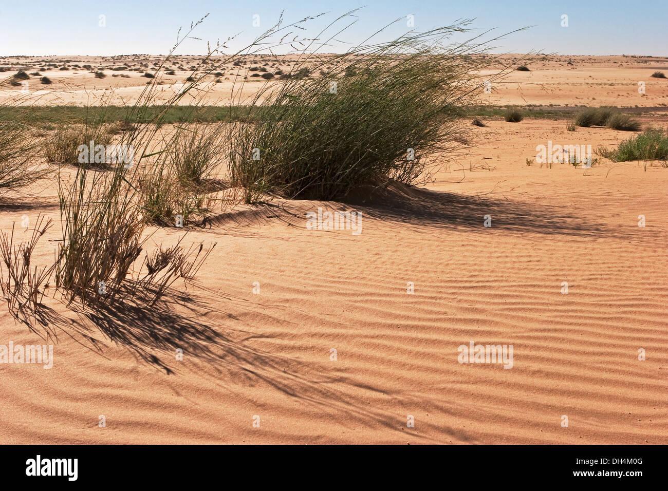 """Eddy patrones de viento en la arena del desierto con plantas y hierba de camello, mostrando """"ecologización del desierto"""", después de las recientes precipitaciones muy raros Imagen De Stock"""
