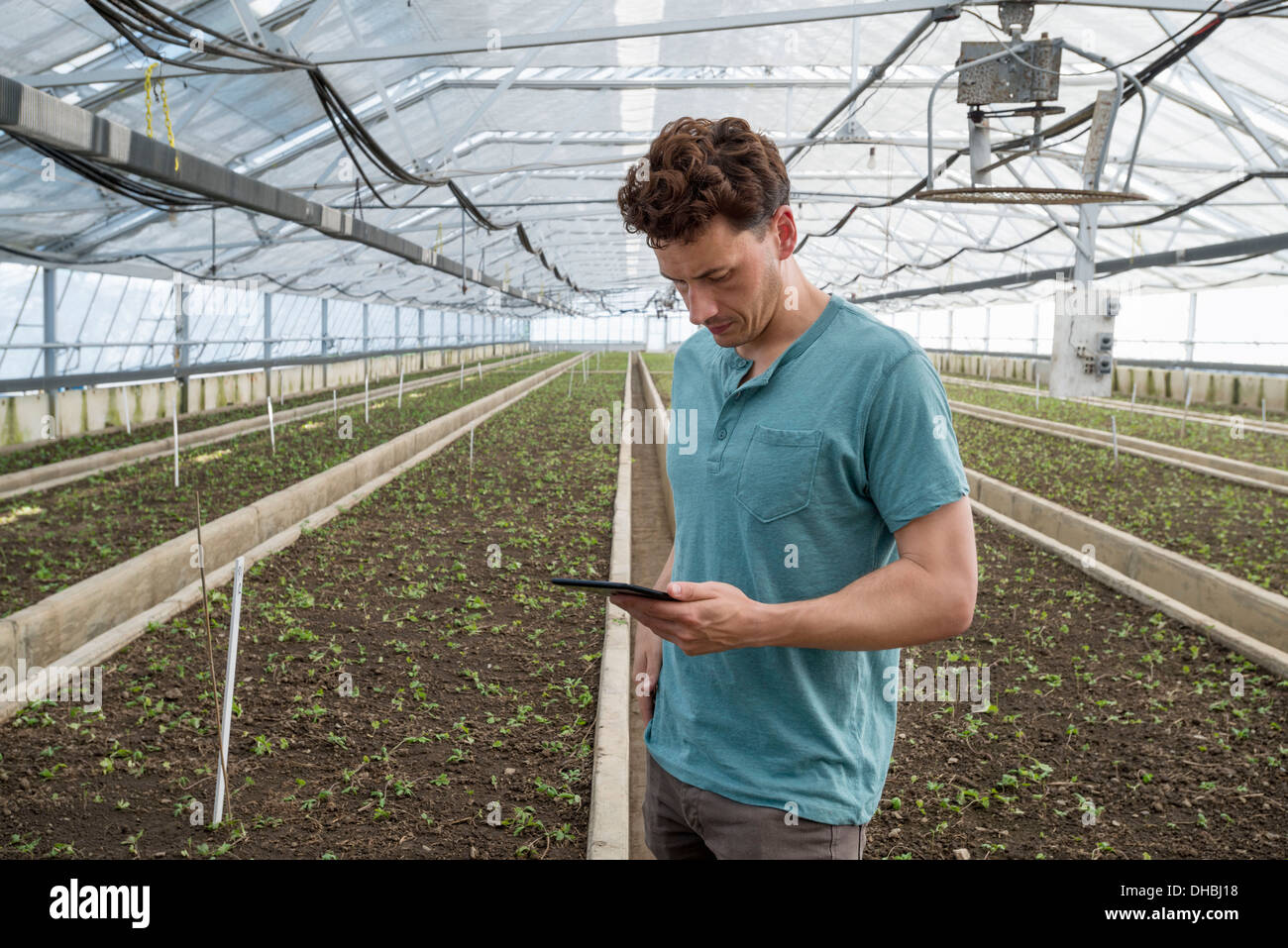 Un invernadero comercial en un vivero de plantas crecen flores orgánicas. Un hombre usando una tableta digital. Imagen De Stock