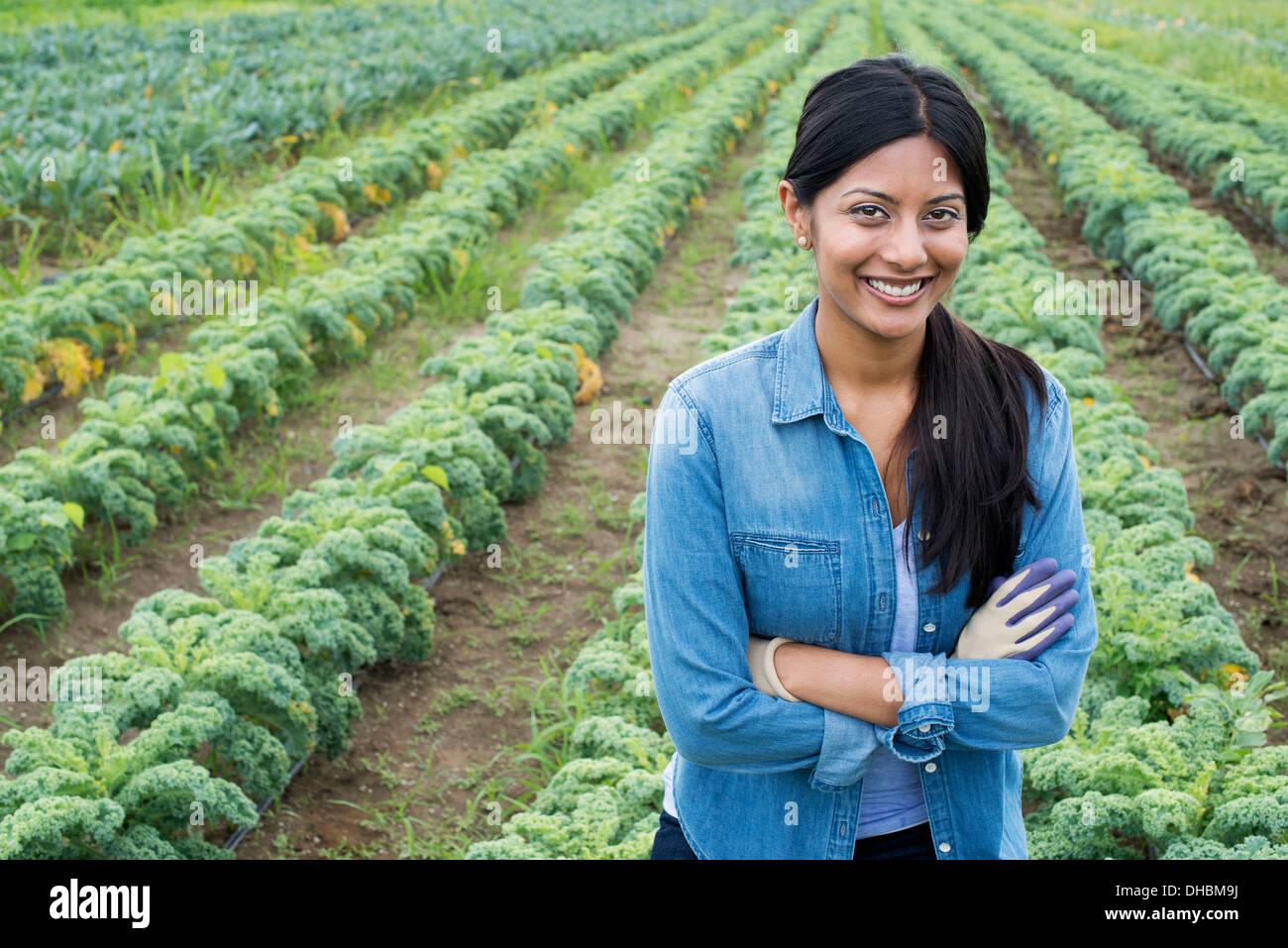 Filas de plantas de crecimiento vegetal rizada verde en una granja orgánica. Un hombre inspeccionando la cosecha. Imagen De Stock