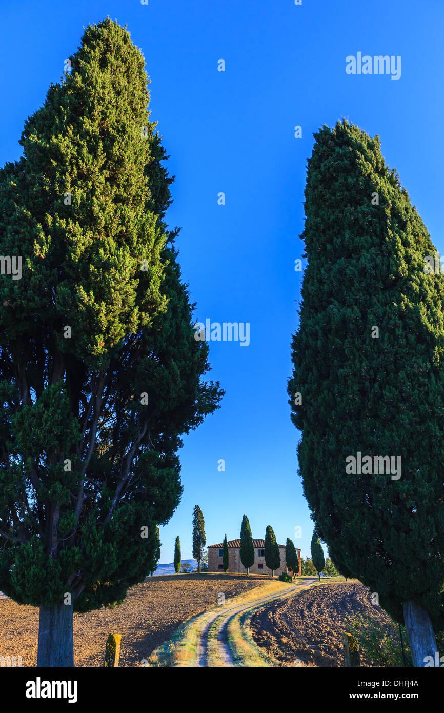 Casa con el famoso ciprés en el corazón de la Toscana, cerca de Pienza, Italia Foto de stock