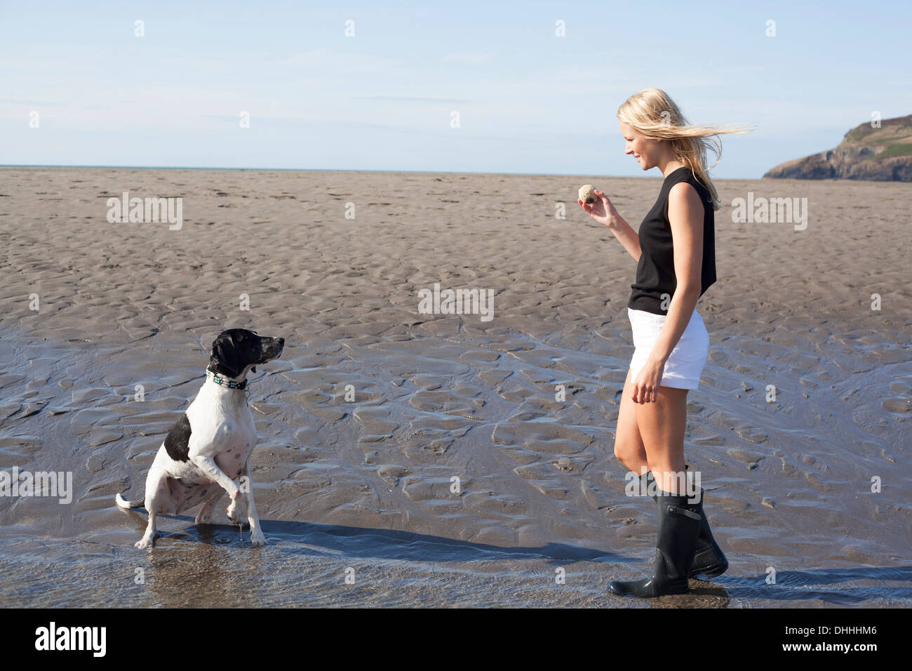 Mujer sosteniendo la bola de perro en la playa, Wales, REINO UNIDO Foto de stock