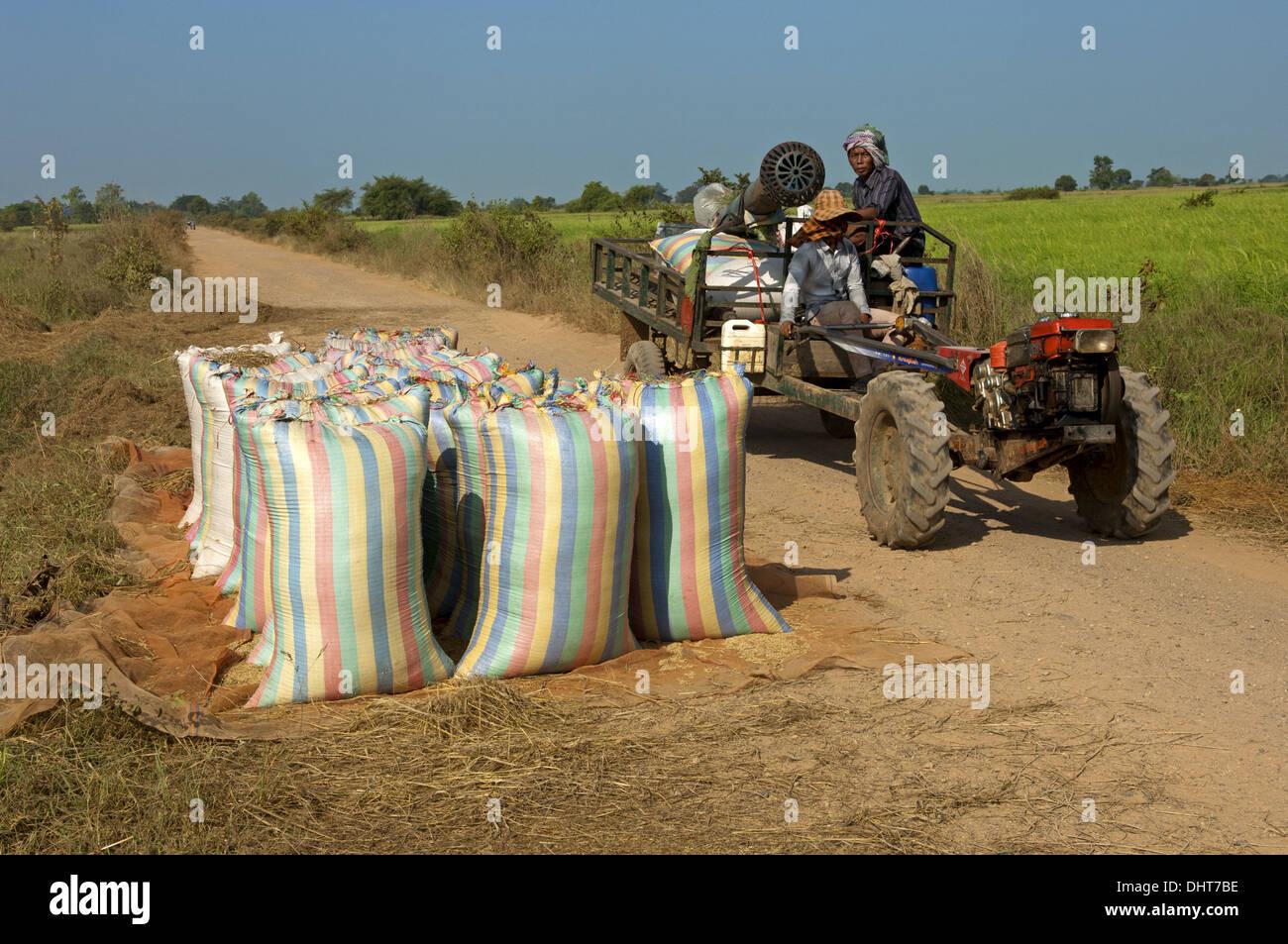 Abultamiento de sacos de arroz por la carretera, Camboya Foto de stock