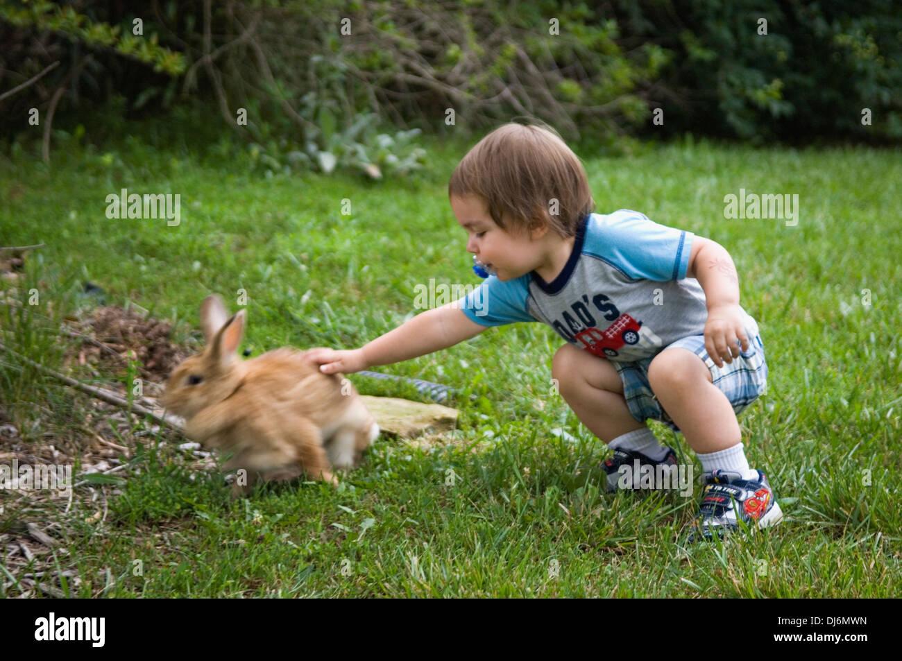 Niño Acariciar a Bunny en los suburbios de Patio Interno Imagen De Stock