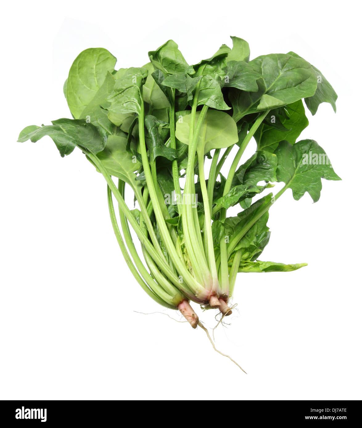 Los manojos de espinacas Foto de stock