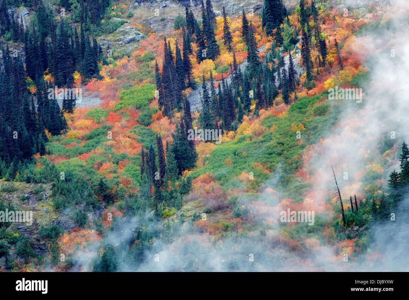 Color en el otoño y nubes bajas. Parque Nacional Cascadas del Norte. Washington Foto de stock