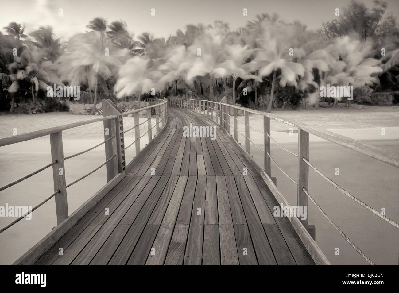 Boardwalk en palmeras en el viento. La Polinesia Francesa Imagen De Stock