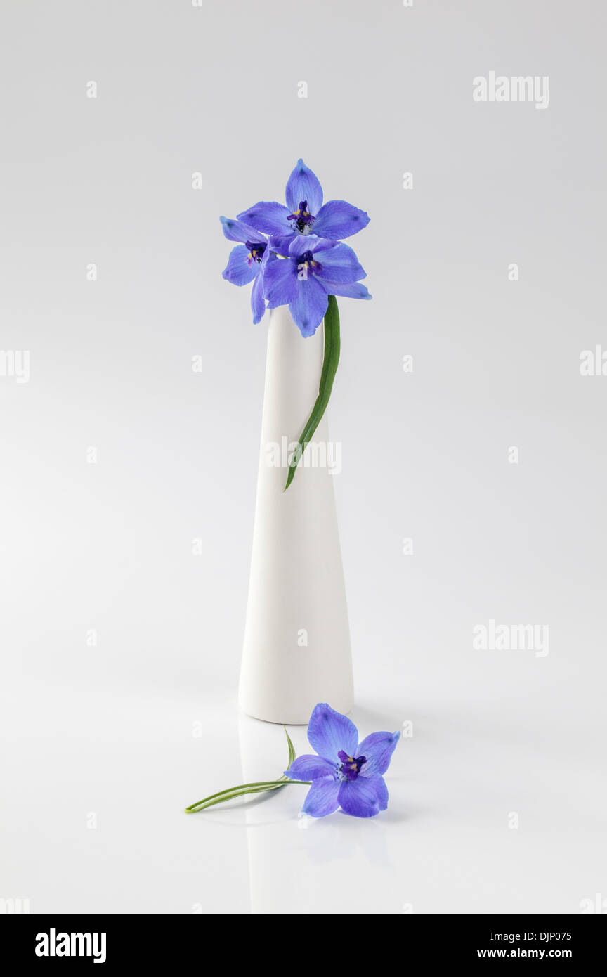 Delphiniums azules en jarrón blanco Imagen De Stock