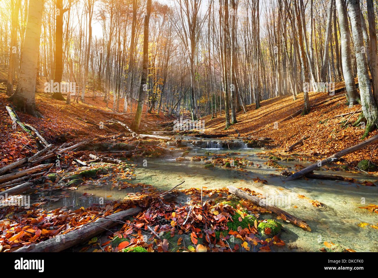 Río de montaña salvaje en el bosque de otoño Foto de stock
