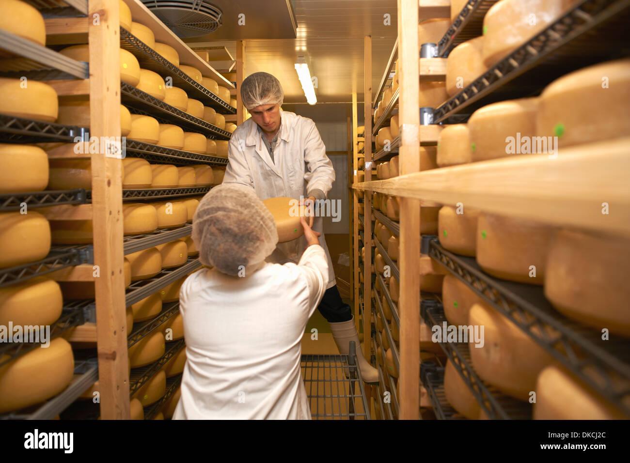 Los trabajadores poner queso redondo para almacenamiento en fábrica de granja Imagen De Stock