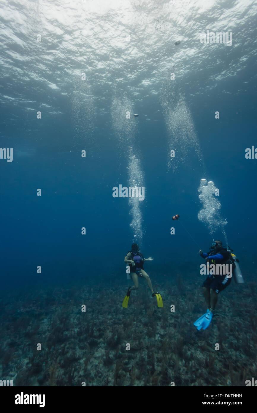 Dos buzos explorar el arrecife de coral en la Reserva Marina Hol Chan en el Caribe, Belice, Centroamérica Foto de stock