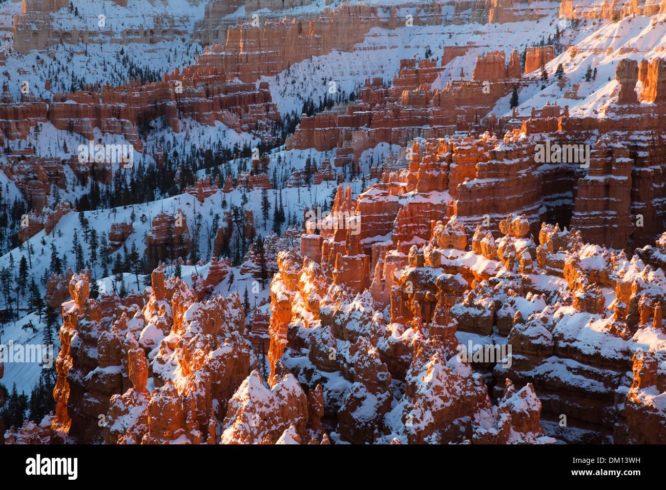 Los hoodoos en el Anfiteatro de Bryce Canyon en invierno al amanecer, Utah, EE.UU. Foto de stock