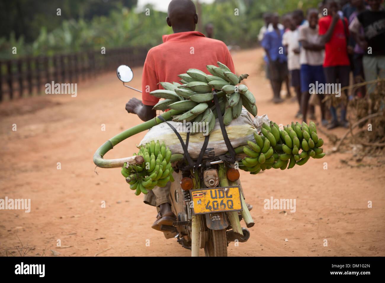 Los plátanos en la parte trasera de una motocicleta cerca de Kampala, en Uganda. Imagen De Stock