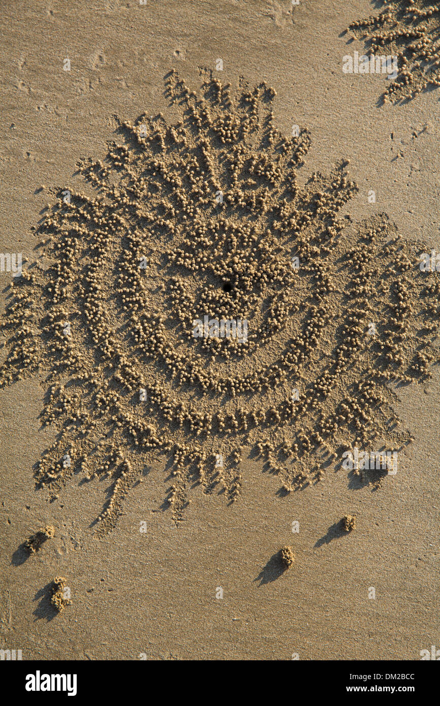 Patrones de cangrejo en la arena de la playa de Ngapali al anochecer, Rakhine, Myanmar (Birmania) Imagen De Stock