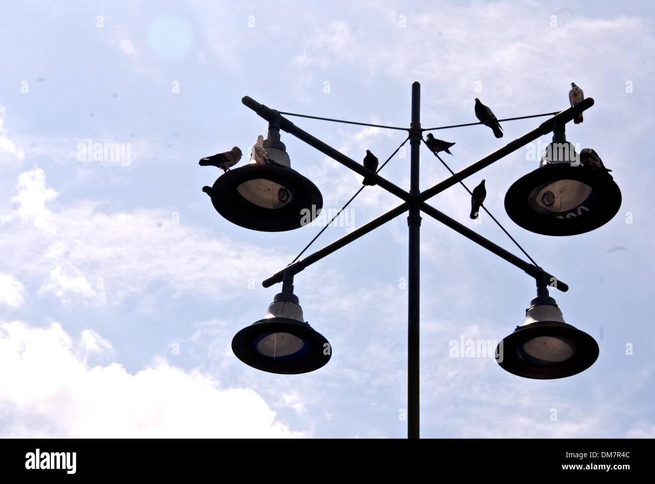 Una bandada de palomas, de pie en la parte superior de una lámpara de la calle, como hacen cada día en Imagen De Stock
