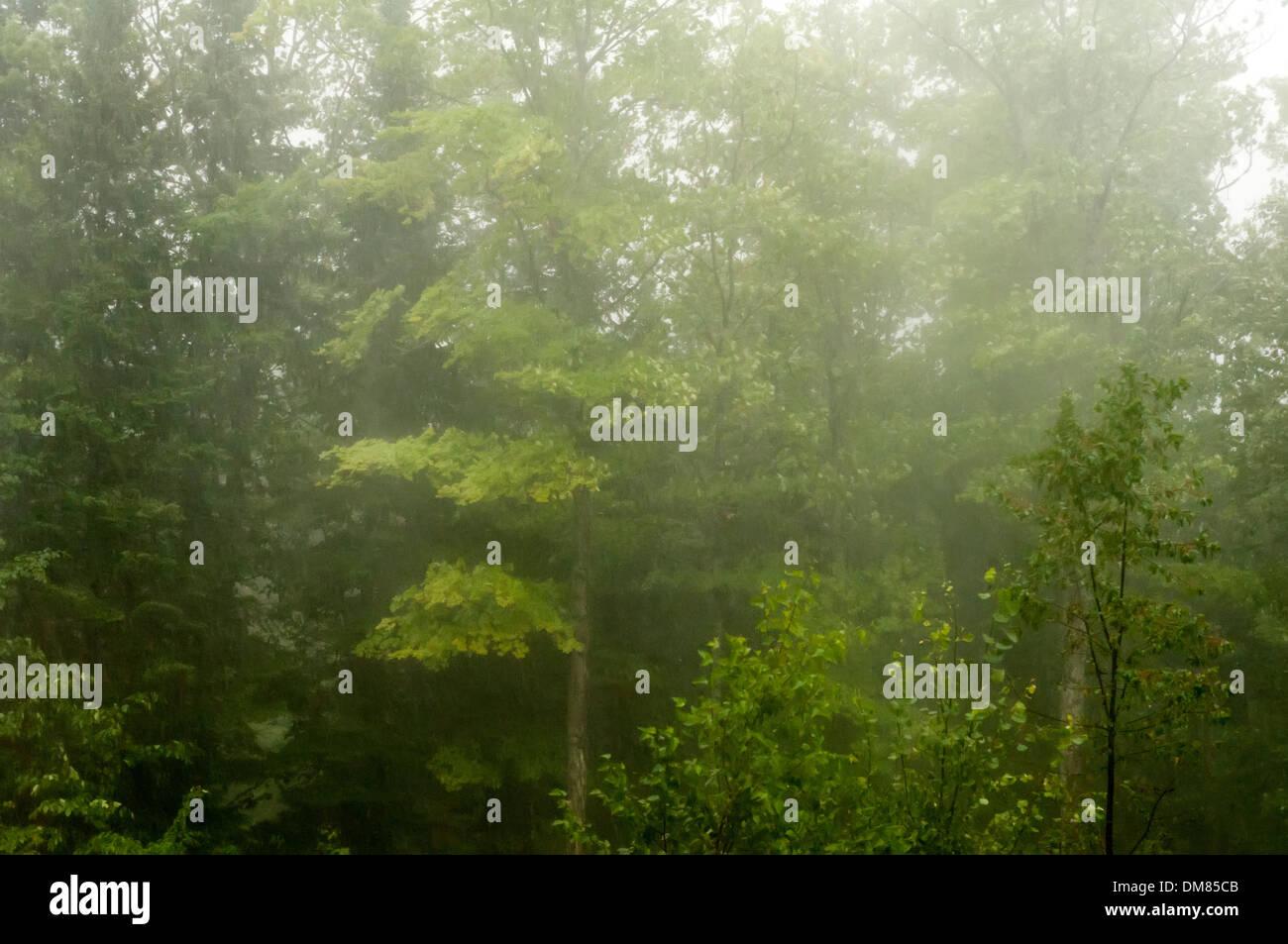 Lluvias torrenciales Imagen De Stock