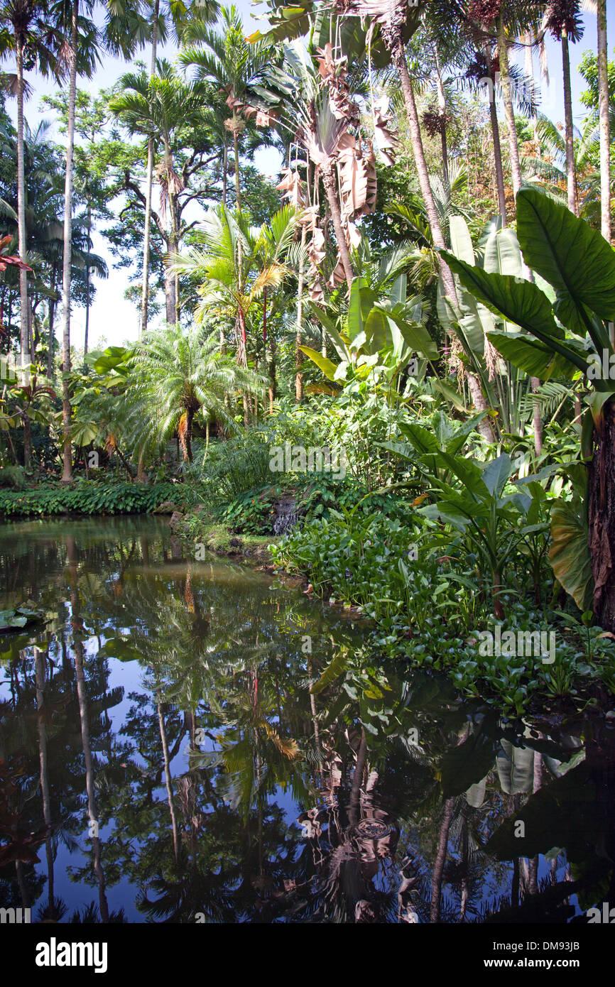 Lily Lago Jardín botánico tropical en Hawai, en el Scenic loop de la autopista 19, al norte de Hilo, y en Bahía Onomea. Foto de stock