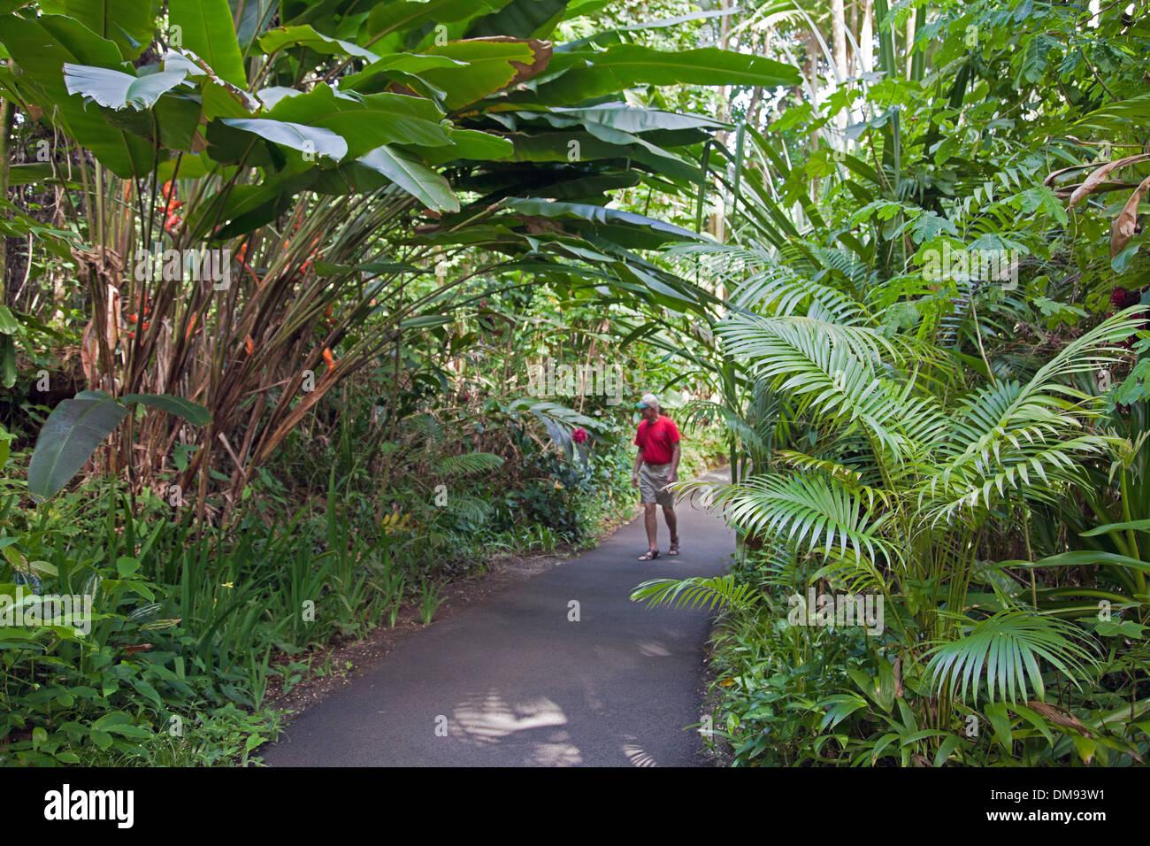 Hawaii es un jardín botánico tropical de 37 acres de reserva natural y santuario en Onomea Bay, al norte de hilo. Foto de stock