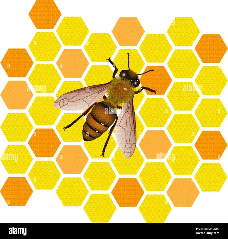 abeja de vector Imagen De Stock