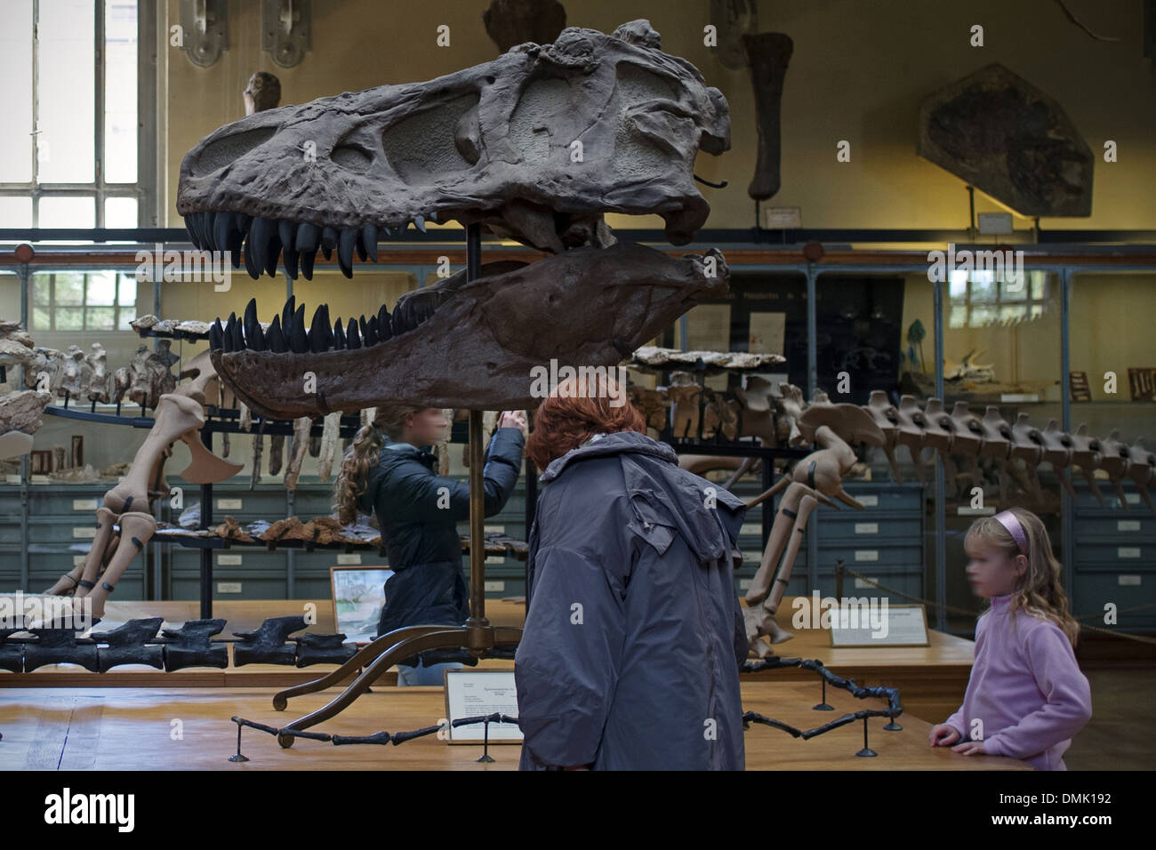 Museo, Galería de la paleontología y la anatomía comparada, el ...