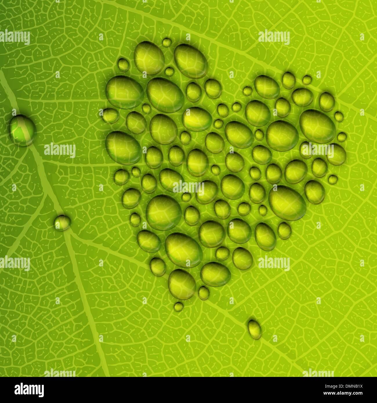 Gotas de rocío en forma de corazón con hojas verdes. Ilustración vectorial EPS10 Ilustración del Vector