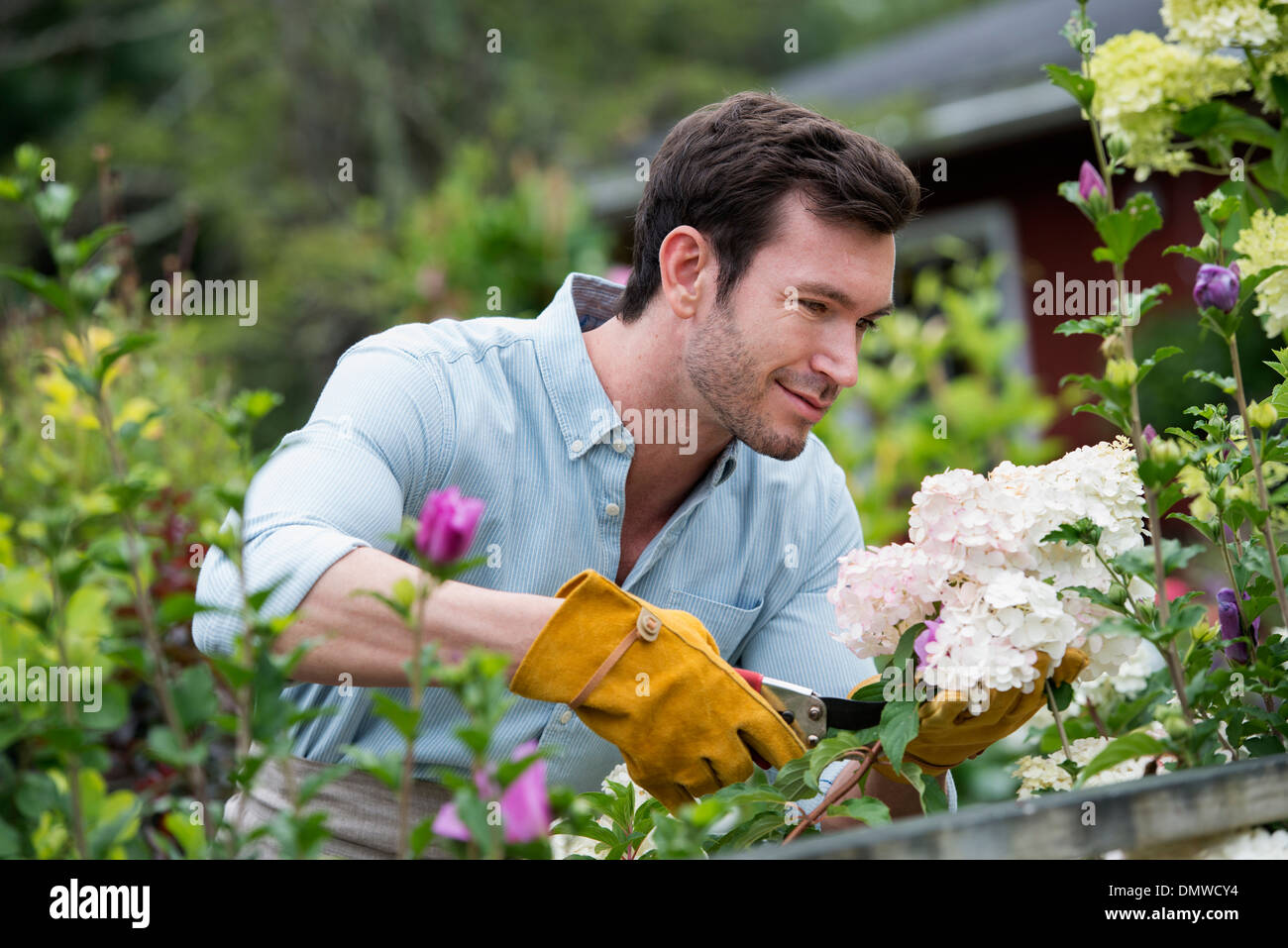 Un vivero de plantas de flores org nicas un hombre que for Que es un vivero ornamental