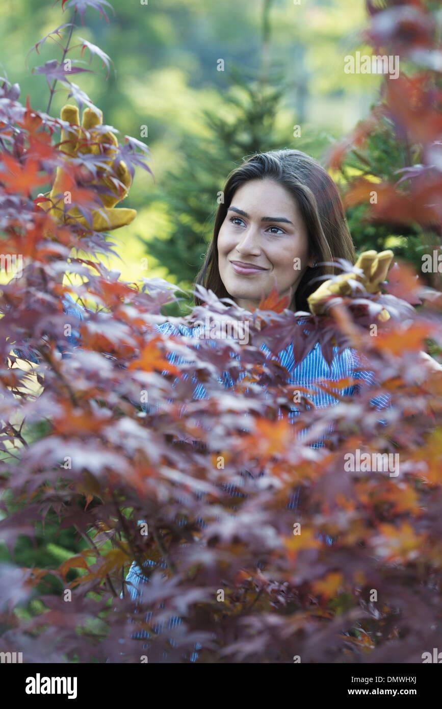 Una mujer en un vivero pruing hojas de un árbol de Acer. Foto de stock